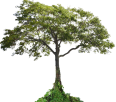 Image - Entourage - Tree 18