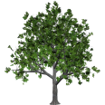 Image - Entourage - Tree 23