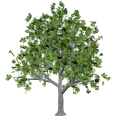 image - entourage - tree 24
