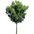 Image - Entourage - Tree 34