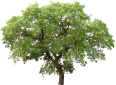 image - entourage - tree 37