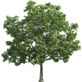 image - entourage - tree 38