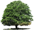 image - entourage - tree 43