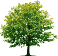 image - entourage - tree 45