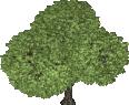cutout tree 47