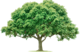 image - entourage - tree 48