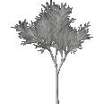 tree generic