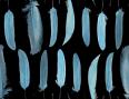 wallpaper plumes bleu
