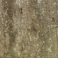 tree trunk texture 3