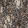 Tree Trunk Texture Long 2