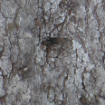 tree trunk texture long 3