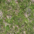 Tree Trunk Texture Mossy 2