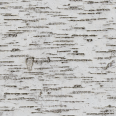 Tree Trunk Texture 2 Birch