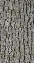 Bark 6