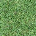 Grass Clover