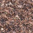 Ground Leaves