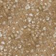 Ground Stones