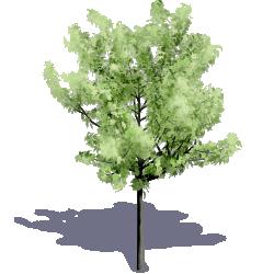 Generic Summer Tree 01