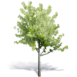 Generic Summer Tree 2