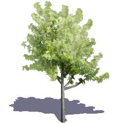 Generic Summer Tree 02