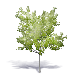 Generic Summer Tree 3