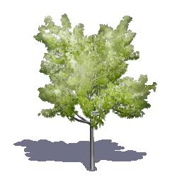 Generic Summer Tree 03
