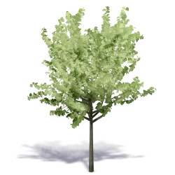 Generic Summer Tree 4