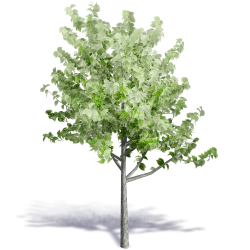 Generic Summer Tree 5