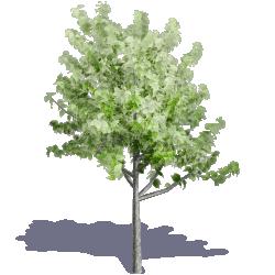 Generic Summer Tree 05