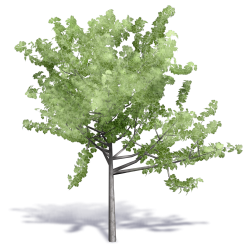 Generic Summer Tree 6