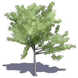 Generic Summer Tree 06