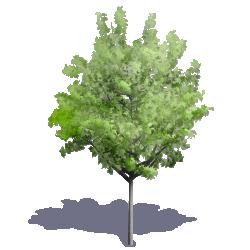 Generic Summer Tree 07