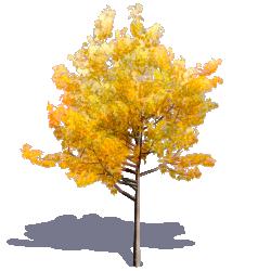 Generic Autumn Tree 01