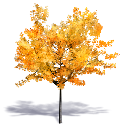 Generic Autumn Tree 02