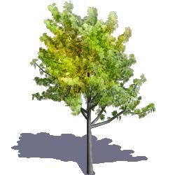 Generic Summer Tree 08