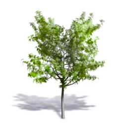 Generic Summer Tree 09