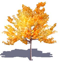 Generic Autumn Tree 03