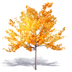 Generic Autumn Tree 3