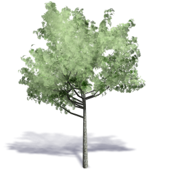 Generic Summer Tree 10