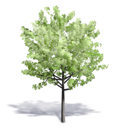 Generic Summer Tree 11