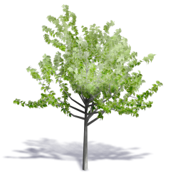 Generic Summer Tree 12