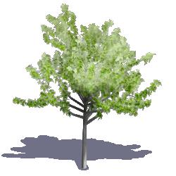 Generic Summer Tree 12