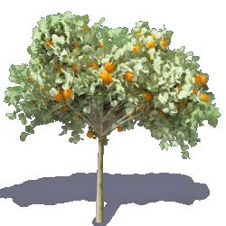 Orange Tree 2