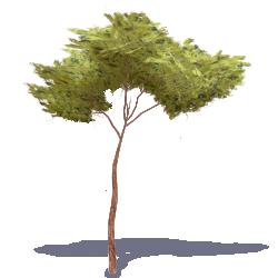 Stone Pine Tree 3