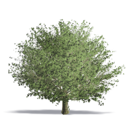 Plants - Free CAD and BIM Objects 3D for Revit, Autocad