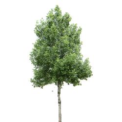Cutout Tree 22