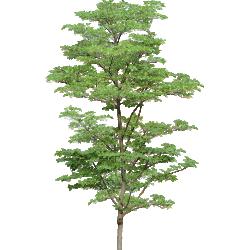 Cutout Tree 25