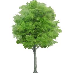 Cutout Tree 26