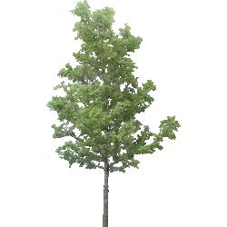 Cutout Tree 27