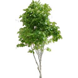 Cutout Tree 31